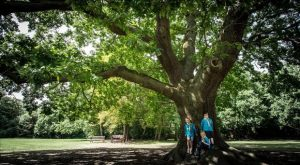 The Gilwell Park Oak Tree