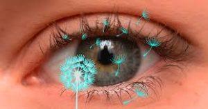 Pollen Eyes