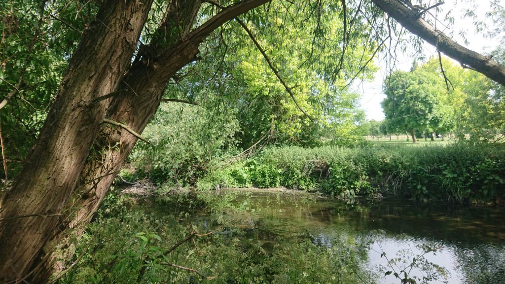 The River Brent with green trees